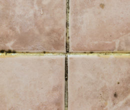Prevent Mould from Growing on Your Tiles
